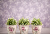 Green bushes in purple room — Stock Photo