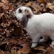 White cute rabbit over leaf — Stockfoto