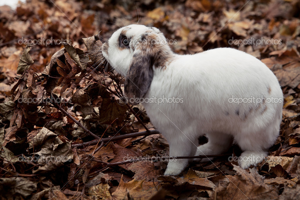 kyolshin  小白兔 bloodua  可爱的小宝贝厨师大锅和蔬菜 balkonsky