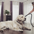 Stock Photo: Young womcleaning big dog