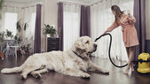 Young woman cleaning big dog — Stock Photo