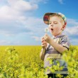 Colorful picture of young boy on the meadow — Stock Photo