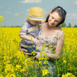Walking among the canola flowers — Stockfoto