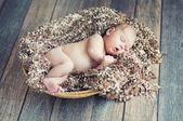 Newborn baby sleeping in wicker basket — Stockfoto