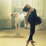 Duet of black&white ballet swans — Stock Photo
