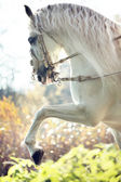 Majestic royal horse in move — Stock Photo