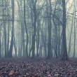 Foggy evening in the old forest — Stock Photo