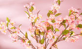 Spring background with pink flowers — Stock Photo