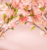 Pink flowers decorating the flat — Stock Photo