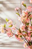 Sweet-smelling spring flowers in the kitchen — Stock Photo