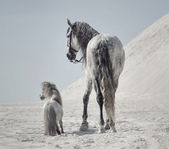Great shot of the two horses — Стоковое фото