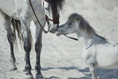 Fine scene of the two hugging horses — Foto de Stock