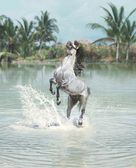 White horse jumping in the pond — Stock Photo