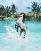 Majestic horse jumping in the pool — Stock Photo