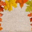 Vellum on background from  maple leaves — Stock Photo