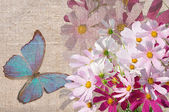 Butterfly on flowers grunge — Stock Photo