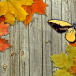 Leaf autumn maple and butterfly on background boards - Stock Photo