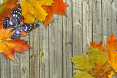 Leaf autumn maple and butterfly on background boards — Stock Photo