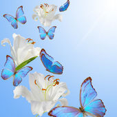 Butterfly and lily — Stock Photo