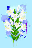 White lily on blue background — Stock Vector