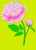 Pink peony 3 — Stock Vector