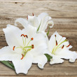 White lily on background of the old wooden fence — Stock Photo