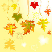 Autumn maple  leavse — Stock Vector