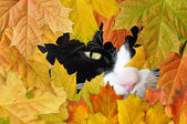 black cat and autumn leaves — Stockfoto
