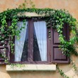 Stock Photo: Wooden window with ivy