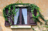 Wooden window with ivy — Stock Photo