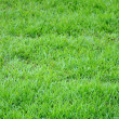 Green grass texture background — Stock Photo #13774694
