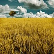 Tree in golden rice field, Harvest time concept — Stock Photo