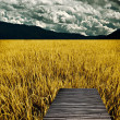 Bamboo bench in golden rice field — Stock Photo