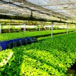 Stock Photo: Plant green house flower nursery
