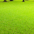 Grass field background — Stock Photo #19167947