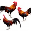 Set of Chicken isolated on white background — 图库照片