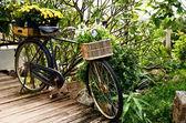 Vintage fiets met bloem in mand — Stockfoto
