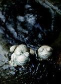 Sculpture de grenouille décorer à fontaine — Photo