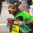 Dog with campaign sign for against the construction of a dam in Mae Wong National Park — Stock Photo