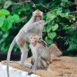Stock Photo: Monkey wild animal
