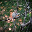 Monkey wild animal sitting on tree with sunset — Stock Photo