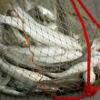 Fish in the net — Stock Photo