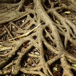 Stock Photo: Root