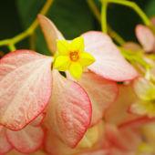 Dona Queen Sirikit, Nice yellow flower — Stock Photo