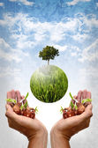 Save the earth by plantation concept — Stock Photo