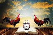 Wake up in morning with rooster crows for read  — Stock Photo