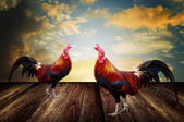 Rooster pet with morning sky background — Stock Photo