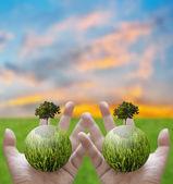 Met een gloeiende bol en een boom in hand, groene concept — Stockfoto