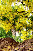 Golden shower flower with Ancient wall of Chiangmai city — Photo