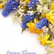 Spring Flowers with dandelion and muscari — Stock Photo